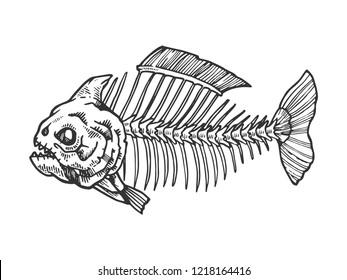Piranha fish skeleton animal engraving vector illustration. Scratch board style imitation. Black and white hand drawn image.