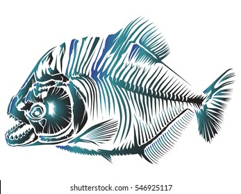 Piranha fish vector illustration isolated on white.