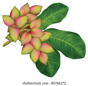 Pistachio tree branch with fruits and leaves. Vector illustration.