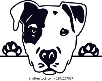 Pit Bull PitBull Terrier dog breed pet