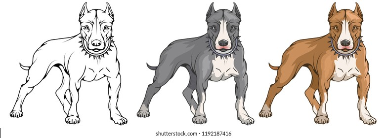 pit bull terrier, american pit bull, pet logo, dog pitbull. colored pets for design. colour illustration suitable as logo or team mascot, dog illustration. vector graphics to design.