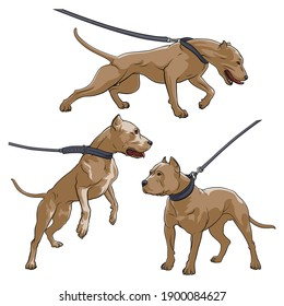 Pit Bull Terrier with a collar. Dog on a leash. Vector illustration on a white background.
