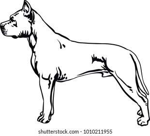 Pit Bull Terrier, Pitbull