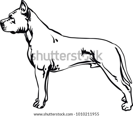 Pit Bull Terrier Pitbull Stock Vector Royalty Free 1010211955