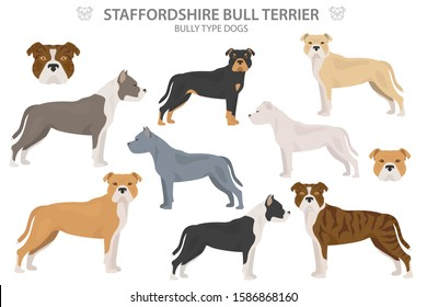 Pit bull type dogs. Staffordshire bull terrier. Different variaties of coat color bully dogs set.  Vector illustration