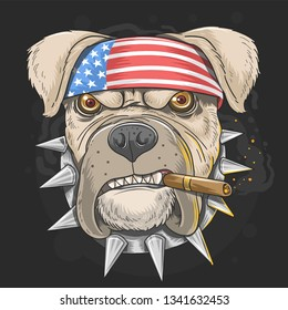 PITBULL AMERICA FLAG HEAD PUNK