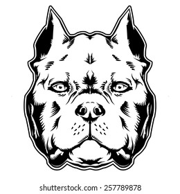 American Bully Images Stock Photos Vectors Shutterstock