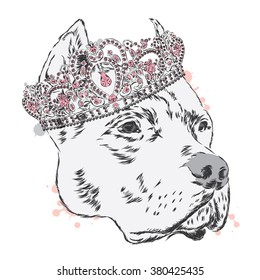 Pitbull in the crown. Dog vector. Vector illustration for greeting card, poster, or print on clothes.