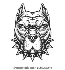 Pitbull head in black and white color style. Vector illustration