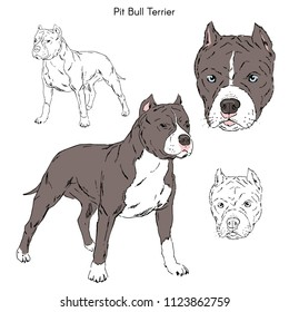 Pitbull illustration, dog breeds