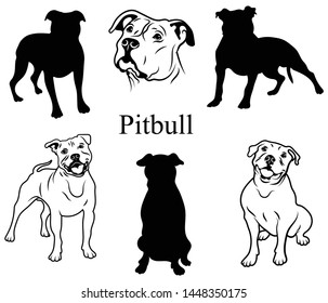 Pitbull set. Collection of pedigree dogs. Black white illustration of a pitbull dog. Vector drawing of a pet. Tattoo.