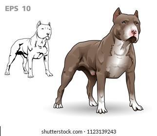 Pitbull terrier standing vector illustration