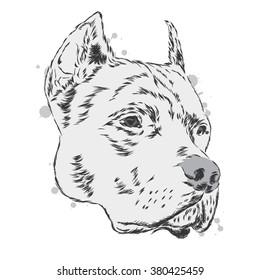 Pitbull vector. Dog.