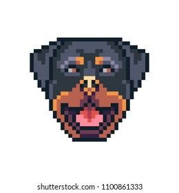 Pixel art rottweiler dog face vector icon.