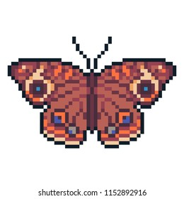Pixel art vecto buckey butterfly isolated on white background.