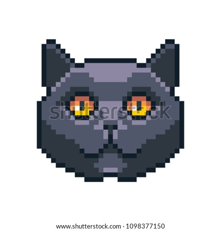 Pixel art vector British shorthair icon isolated on white background.