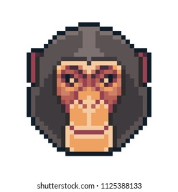 Pixel art vector chimpanzee isolated on white background.