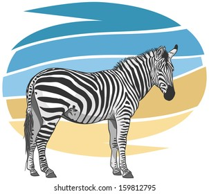 Plains Zebra Illustration