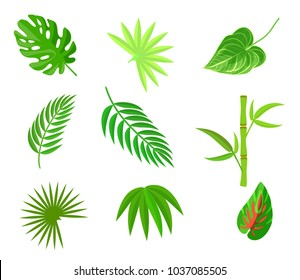 Plam leaf and tropical plant leaves  icons element set isolated on white
