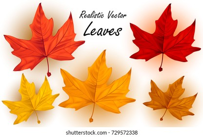 Plane tree (Chinara) leaves - set of 5 realistic vector autumn leaves