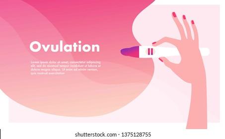 Imágenes, fotos de stock y vectores sobre Ovulation Cycle