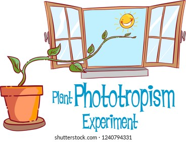 PLANT PHOTOTROPİSM EXPERİMENT