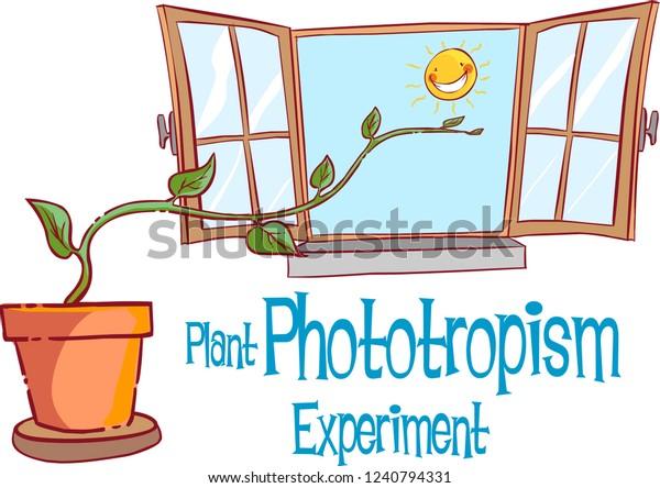 PLANT PHOTOTROPİSM EXPERİMENT