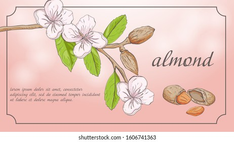 plant banner nature plant almond branch fruit nuts flowers for decoration design background isolated with space for text and title vector EPS 10