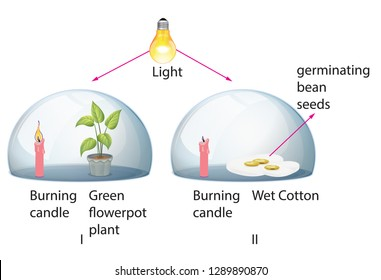 Plant and bean experiment in light environment