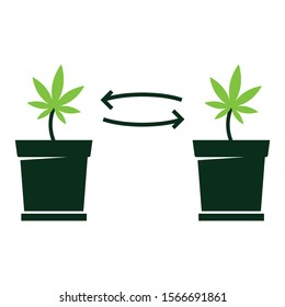 Plant Cloning Concept, Cannabis Leaf in Pot Vector Icon Design