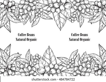 Plant with coffee leaf,berry,bean,fruit, seed. Hand drawn vintage coffee collection vector illustration.