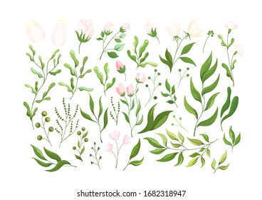 Plant elements of flowers, herbs, and leaves. Botanical set of flower elements , plants and flowers for design. Wild and garden foliage branches grass illustration isolated on white.Vector