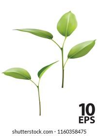 Plant Green Leaf Grow. Vector 3d illustration