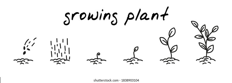 Plant growing concept handdrawn illustration. Cute cartoon vector clip art with 6 illustrations depicting different stages of plant growth from sowing to leaves. Black and white linear sketch