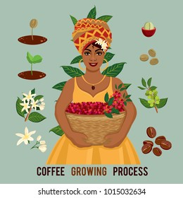 Plant growing from seed to coffee tree. Life cycle plant. Coffee woman farmer with a basket of coffee berries on the farm. Sprout, plant, tree grow bean farm icon