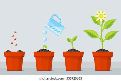 Plant growing stages. Timeline infographic of planting tree process. Green plant flower, graphic gardening seedling plant. Vector illustration.