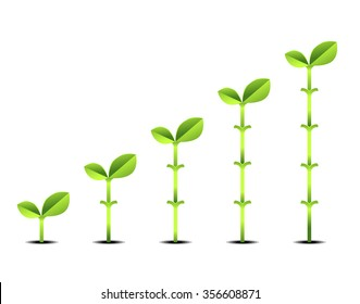 Plant Growth Stages Isolated On Transparent Background