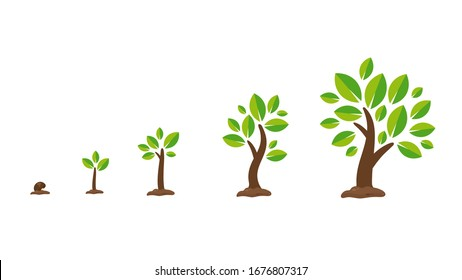 Seed Underground Growing Images Stock Photos Vectors Shutterstock Learn how to draw this simple tree illustration about cartoon tree icon , vector drawing. https www shutterstock com image vector plant growth vector seedlings sprouting seeds 1676807317