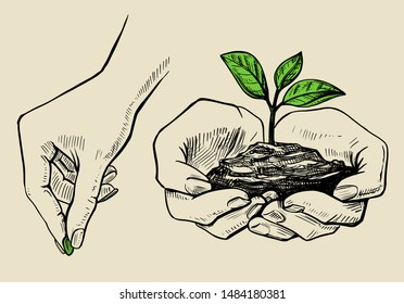 the plant in the hands grows, the hand plants a seed