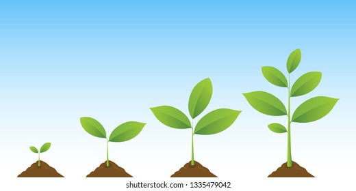 Plant. Infographic of planting tree. Seedling gardening plant. Seeds sprout in ground. Sprout, seed, tree growing agriculture icons. Vector realistic illustration on blue sky background.