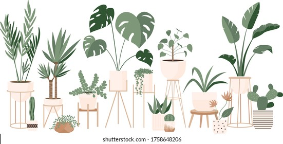 Plant lady green house. Set of cute plants in pots, planters, cacti, tropical leaves. Urban jungle banner, greeting card print. House interior decor elements. Houseplants growing, Home gardening