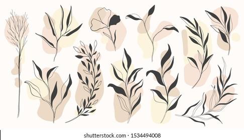 Plant nature hand drawn set. Collection botanical element.Elegant vintage style.Vector illustration.