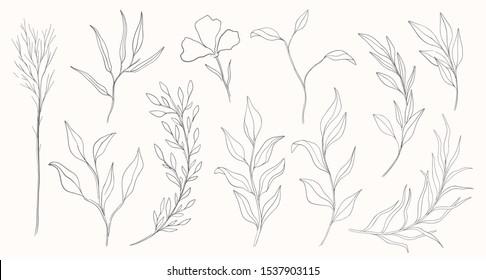 Plant nature hand drawn set. Collection botanical element.Elegante vintage style.Vector illustration.