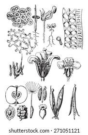 Plant organs, vintage engraved illustration. La Vie dans la nature, 1890.