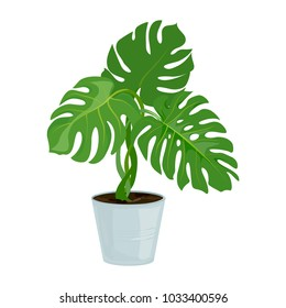 plant in the pot. isolated. vector illustration