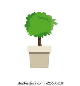 plant pot tree natural decoration