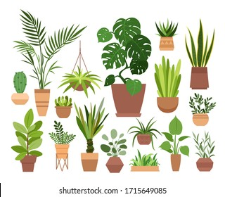 Plant in pot vector illustration set. Cartoon flat different indoor potted decorative houseplants for interior home or office decoration, green garden floral collection icons isolated on white