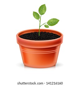 plant pot and young plant isolated on white