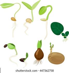 Plant reproduction set