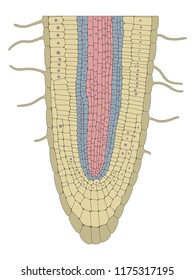 Plant root structure